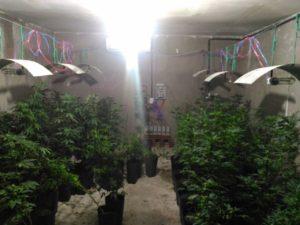 Polícia Militar encontra laboratório de maconha em Santa Rita