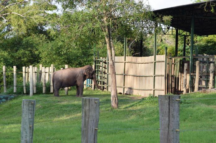 Parque Zoobotânico Arruda Câmara estará aberto para visitação no domingo de eleições